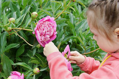 Girl in a garden touches peony flower Stock Image