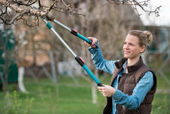 Girl gardener working in the spring garden and trimming tree. The Girl gardener working in the spring garden and trimming tree royalty free stock photo