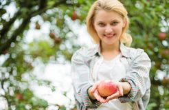 Girl gather apple harvest in own garden. Farmer girl hold apple. Local crops concept. Healthy lifestyle. Eat fruits. Every day. Woman hold apple green garden stock photography