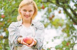 Girl gather apple harvest in own garden. Farmer girl hold apple. Local crops concept. Healthy lifestyle. Eat fruits stock photos