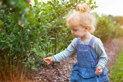 Girl gather blueberries. Little girl gathering blueberries, germany royalty free stock photo