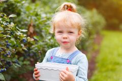 Girl gather blueberries. Little girl gathering blueberries holding a basket royalty free stock photo