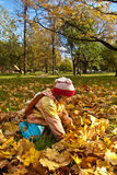Girl gathering autumn leaves Royalty Free Stock Images