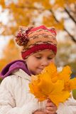 Girl gathering yellow maple leaves Royalty Free Stock Photography