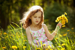 Girl gathers a bouquet of dandelions Stock Image