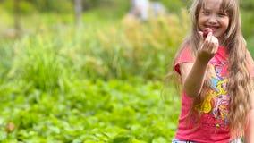 Girl gathers strawberry. stock footage
