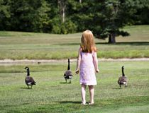 Girl with Geese Stock Photo