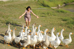 Girl and Geese Royalty Free Stock Photo