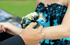 Girl gets corsage Stock Photos