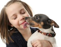 Girl getting kisses from dog. Portrait of a beautiful young girl snuggling with and being licked by a cute terrier puppy dog,  isolated on white in studio Royalty Free Stock Images