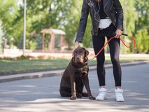 The girl gives commands to the dog, the dog is trained. Young girl gives commands to a dog, trains a dog in the park Royalty Free Stock Photography
