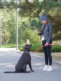 The girl gives commands to the dog, the dog is trained. Young girl gives commands to a dog, trains a dog in the park Stock Photos