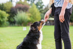 Girl gives a dog a treat Stock Photo