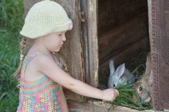 Girl giving green grass to domestic rabbits. Outdoors Stock Image