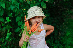 Girl gnaws carrot with a bunch of carrots Royalty Free Stock Photography