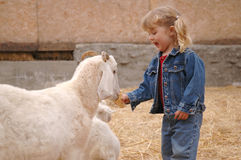 Girl and goat stock images