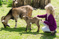 Girl and goat Royalty Free Stock Photography