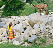 A girl and a goat antelope Stock Images