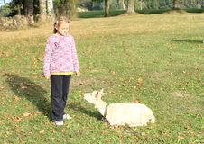Girl and goat. Little girl in black pants and lila pullover standing in front of white lying goat Royalty Free Stock Photos