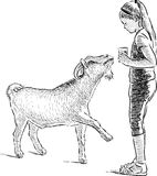 Girl and goat Royalty Free Stock Images