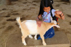 Girl with goat Stock Image