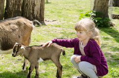 Girl and goats Royalty Free Stock Image