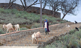 Girl with goats, Morocco Stock Images