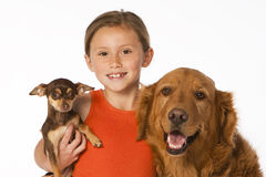 Girl with Golden retriever and Chahuahua Royalty Free Stock Images