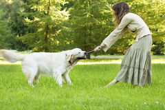 Girl with the golden retriever in the park Stock Photography