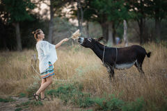 Girl in a good mood feeding donkey dry grass. Royalty Free Stock Photo