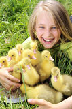 Girl with gosling. Little girl with baby gosling Stock Image