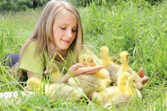 Girl with gosling. Little girl with baby gosling Royalty Free Stock Images