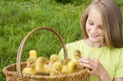 Girl with goslings outdoor Stock Images