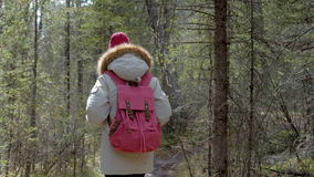 A girl in a gray park is walking along a trail in a dense pine forest close-up 4k. A female in a gray park is walking along a trail with backpack in a dense stock video