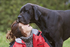 Girl and great dane. Stock Photography