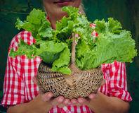 Girl on a green background holding basket with lettuce Royalty Free Stock Images