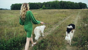 Girl in green dress with two Russian greyhounds. 1 stock video