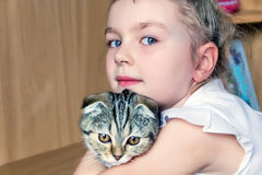 Girl with grey kitty. Blond girl with grey kitty in white stock photos