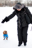 Girl and Griffon Bruxellois. Girl and smooth haired Brussels Griffon puppy is walking in winter park on the snow Royalty Free Stock Image