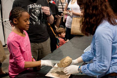 Girl Grimaces Touching Human Brain At Science Expo Stock Image