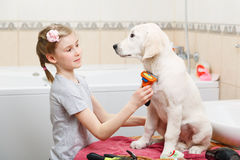 Girl grooming of her dog at home Royalty Free Stock Photo