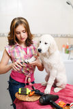 Girl grooming of her dog at home Royalty Free Stock Image