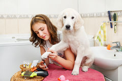 Girl grooming of her dog at home Stock Photography