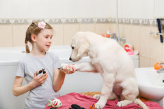 Girl grooming of her dog at home Stock Photos