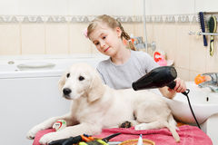 Girl grooming of her s dog at home Stock Image
