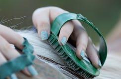 Girl grooming horse Royalty Free Stock Photos