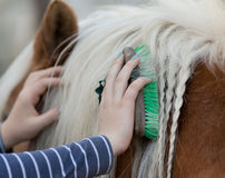 Girl grooming horse Royalty Free Stock Photos