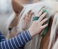 Girl grooming horse Stock Photography