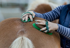 Girl grooming horse Royalty Free Stock Image