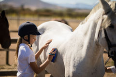 Girl grooming the horse in the ranch. On a sunny day stock photos